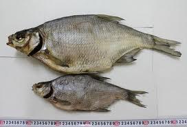 москва вяленая рыба